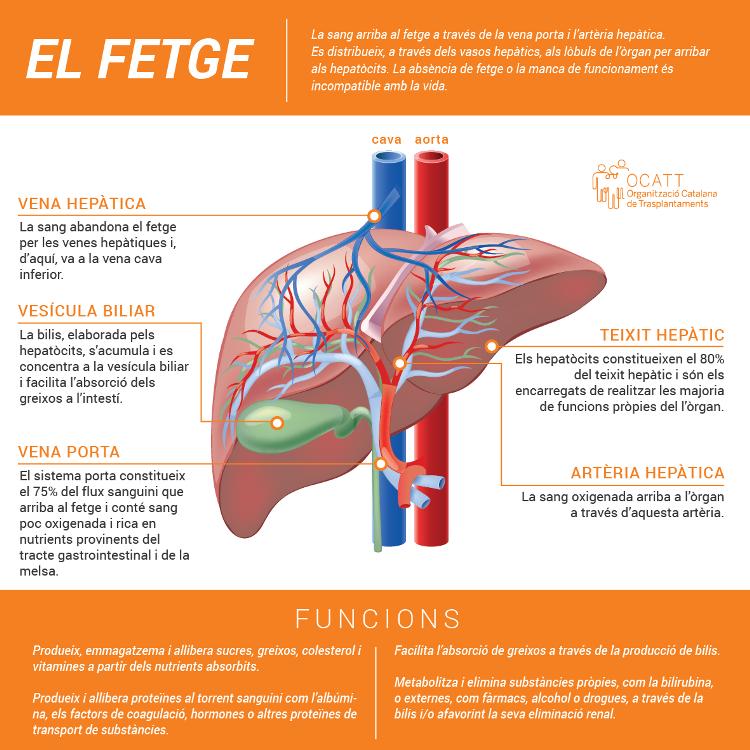 Funciones, enfermedades y prevención. Donación y trasplante
